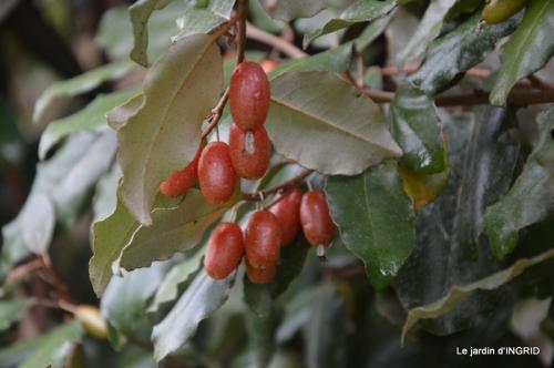 oiseaux cacaouettes gouttes,petits fruits 070.JPG