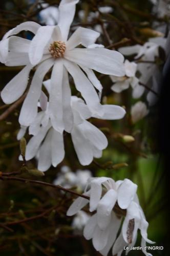 jardin (3 semaine de mars) 080.JPG