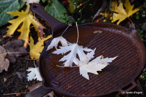 jardin serre bucher automne 024.JPG