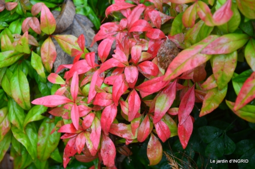 Brouillard,cypres chauve,jardinage 036.JPG