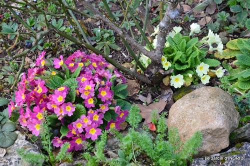 grues ,jonquilles,violettes,Nikky 037.JPG