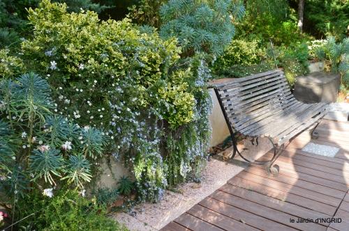 cygnes,jardin,apres la tonte 070.JPG