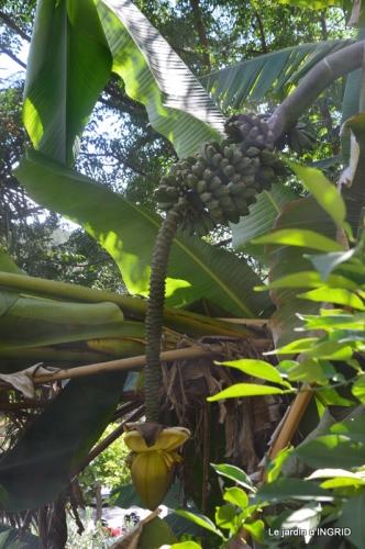 bambous Roque Gageac,jardin,bouquet 232.jpg