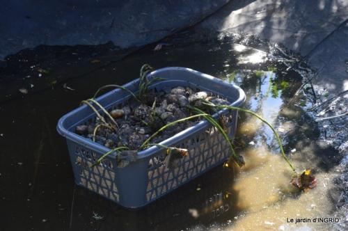 semis,bassin,tour du jardin 102.JPG