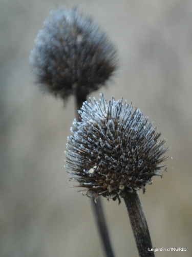 première gelée,compositions florales à garder,jardin 109.JPG
