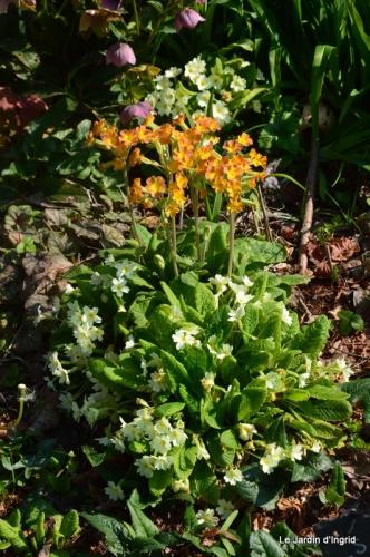 tonte,jardin,fleurettes 007.JPG