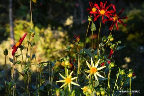 jardin Mme Perichou,grandes fleurs,bouquet,jardin 054.JPG