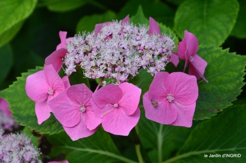 jardin,papillons,Cadouin,légumes,Sophie, 028.JPG