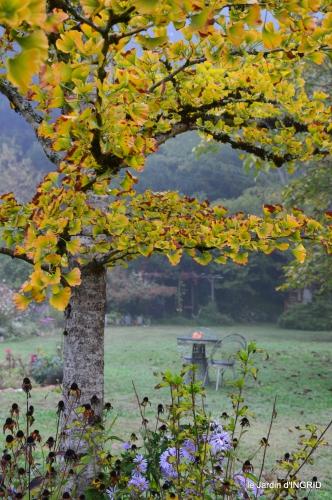 brouillard le matin d'automne 040.JPG