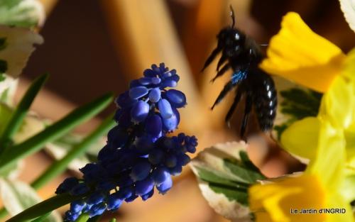 jardinière,insectes,achats 020.JPG