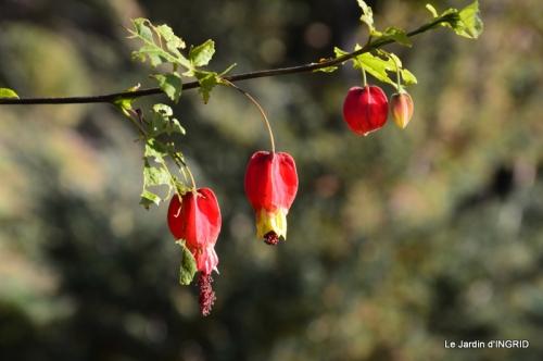 jardin, feuilles,sauges,gloriette,land art 088.JPG