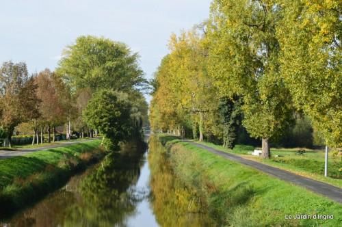 sauges,plectanthrus,Romane,canal,manthe r.,automne 055.JPG