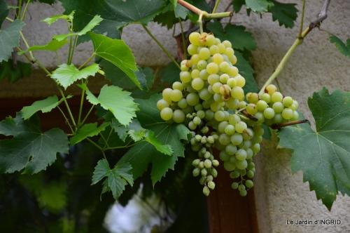 confiture,bouquet,petit jardin 081.JPG