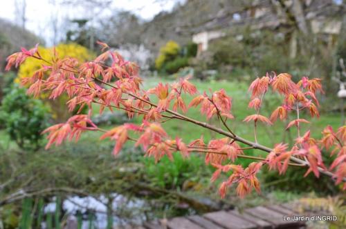 jardin (3 semaine de mars) 102.JPG