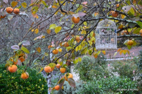 jardin automne 007.JPG