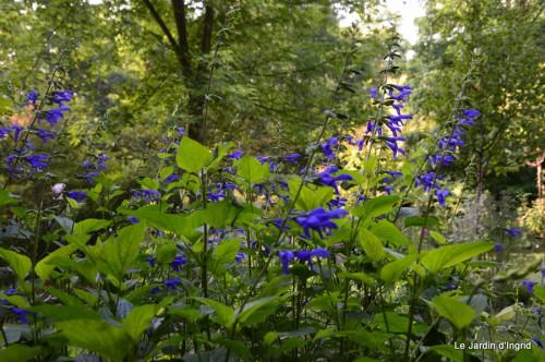 fleurs bleues,hortensia bleu,moi bébé 007.JPG