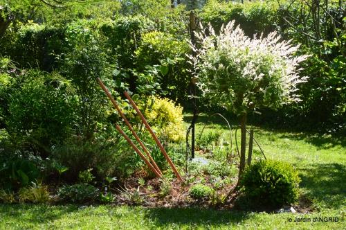 rosier de banks,jardin,cygnes,osier 037.JPG