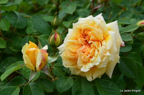 jardin,roses,cabane 065.JPG