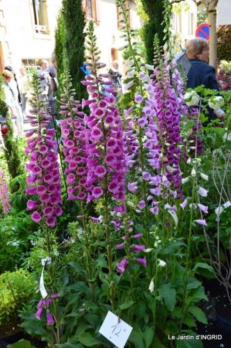 Cadouin,ancolies,roses,pollen,osier,photos Fabien,coquelicots 011.JPG