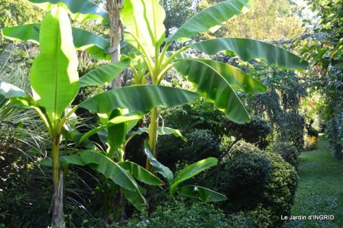 panier,composition,St Astier,jardin,lavande 065.JPG