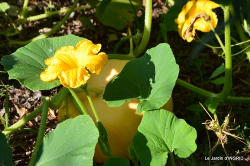 dahlias,jardin,puces st Avit Seigneur,Paniers Issigeac,Romane 050.JPG