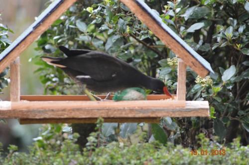 oiseaux,poules,plantes janvier 096.JPG