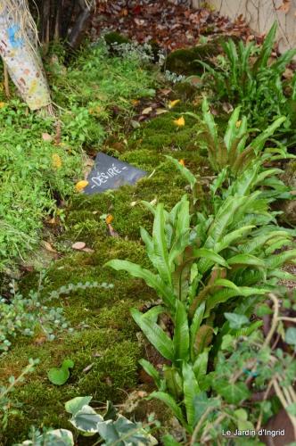 travaux,érable rouge,abeilles,Monpazier,jardin 059.JPG