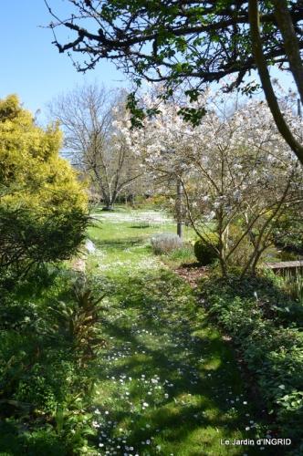 jardin printemps 006.JPG