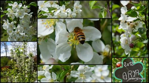 2014-04-05 canards,pivoine,malus,abeilles,jardin1.jpg