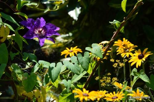 agastache,hibiscus moscheutos,ricin,phlox,plumbago,anémone du japon,rue odorante