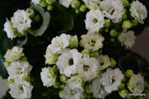 canal,fleurs blanches,marguerites,LE FLEIX,osier 012.JPG