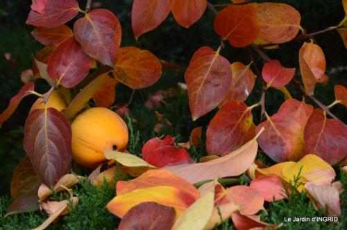 les arbres en automne,cabane 053.JPG