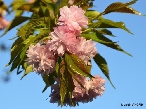tour de jardin d'avril ,tonte 072.JPG
