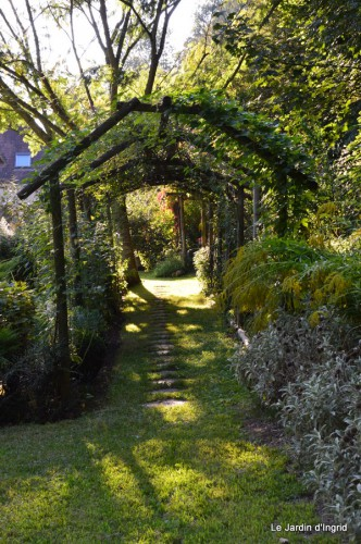jardin,asters,fleurs blanches,chatte,rosiers roses 079.JPG