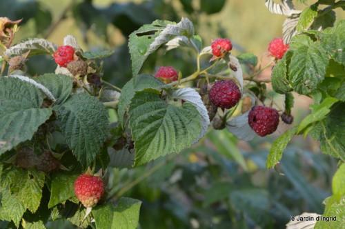 jardin,fruits,Caro,papillons,manthe religieuse,Lalinde 059.JPG