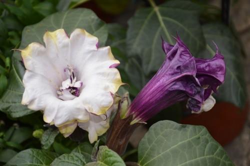 CADOUIN,cascade,iris,roses,fl.sauvages 068.JPG