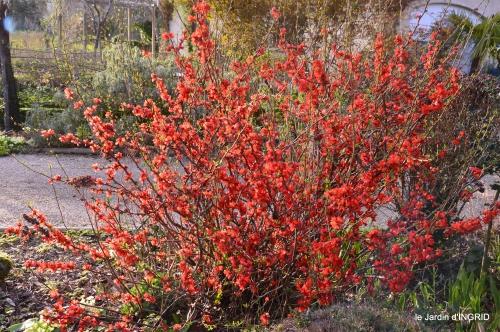 primevères ,jardin 036.JPG