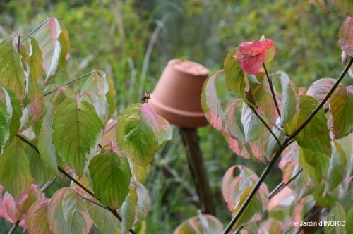 jardin en septembre,les cygnes 138.JPG