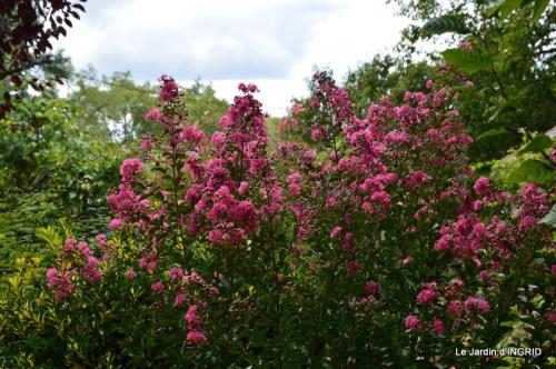 dahlias,massifs refaits,Lalinde,jardin 089.JPG