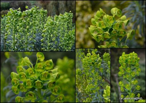 2015-03-28 jardin (3 semaine de mars)2.jpg