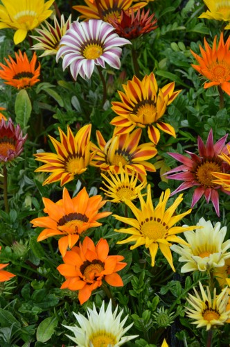 CADOUIN,cascade,iris,roses,fl.sauvages 061.JPG
