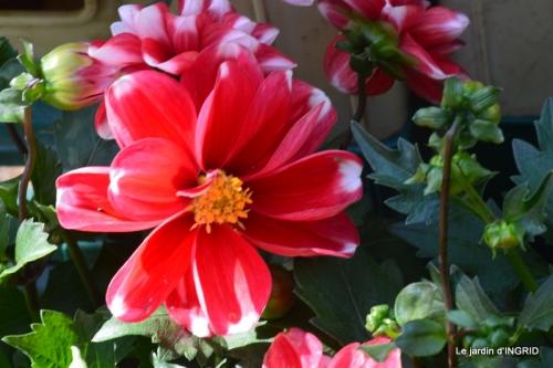 muguet,féte des fleurs Lalinde,jardin 088.JPG