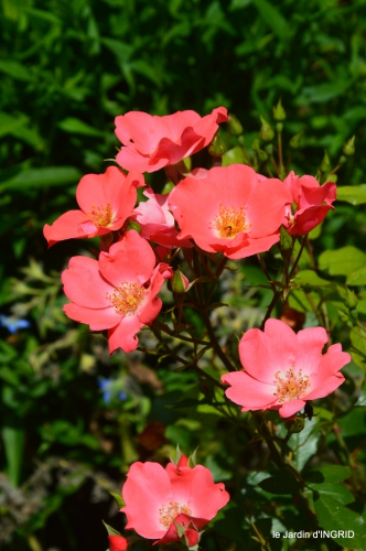 jardin,papillons,Cadouin,légumes,Sophie, 087.JPG