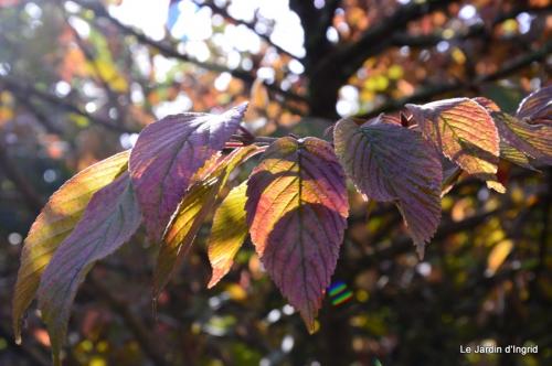 jardin automne,Arya avec Nicky 017.JPG