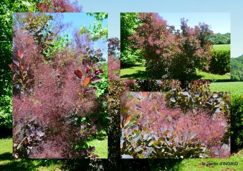 2017-06-10 le jardin de Frescati,roses8.jpg
