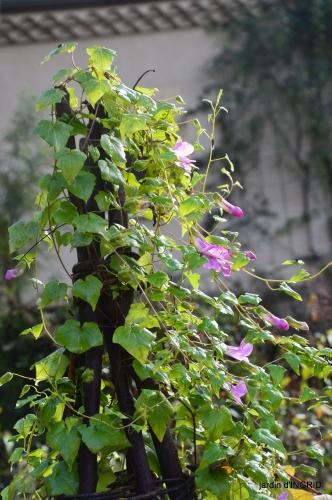 couleurs d'automne,bouquet,lune 072.JPG