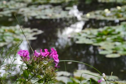 bouquet,jardin de Monet,les vaches,Pourville sur mer 133.jpg