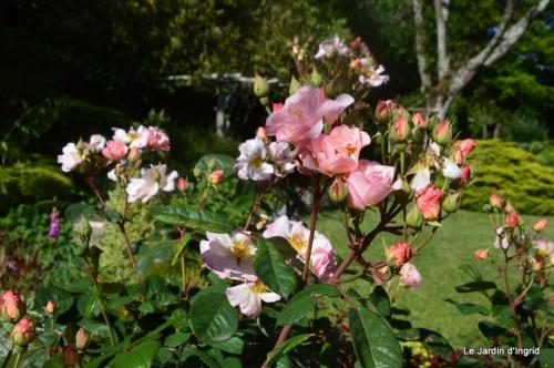 jardin avril et mai, 125.JPG