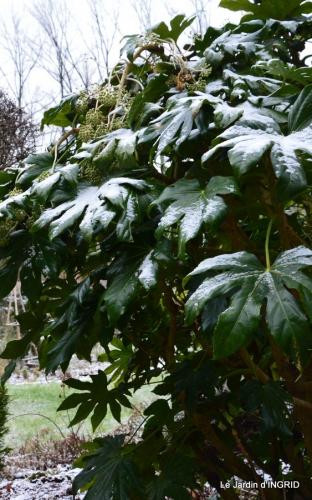 oiseaux première neige 025.JPG