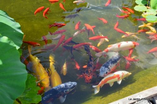 les jardins d'eau de Carsac 161.JPG